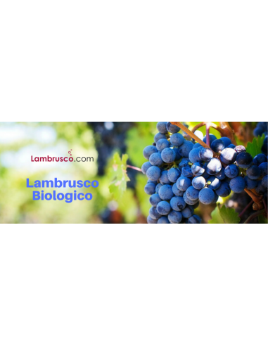 Enoteca del Lambrusco Biologico